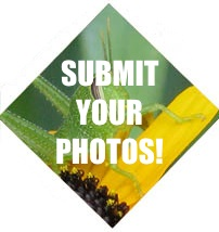 photocontestsubmit-button