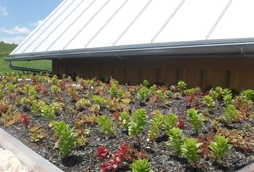 Private green roof