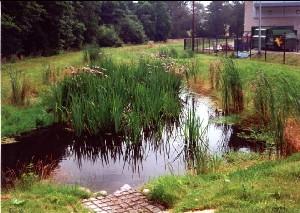 constructed_wetlandrs